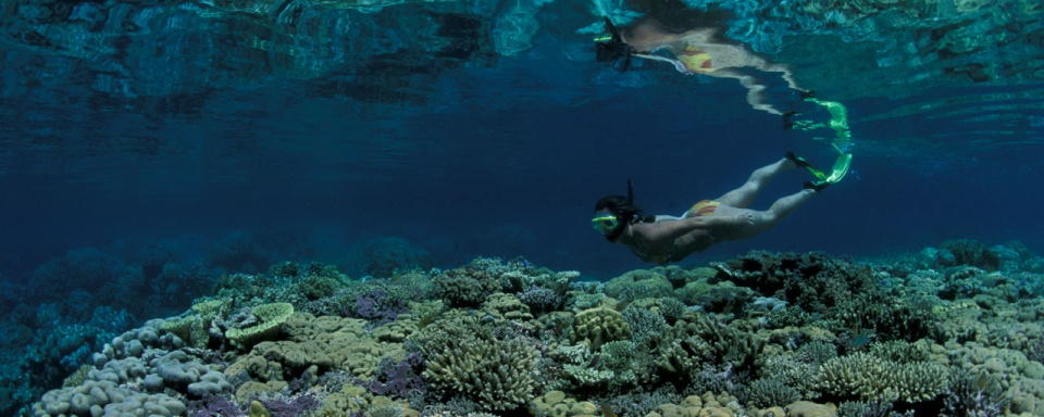 Snorkeling © Walindi Dive Center © Franco Banfi